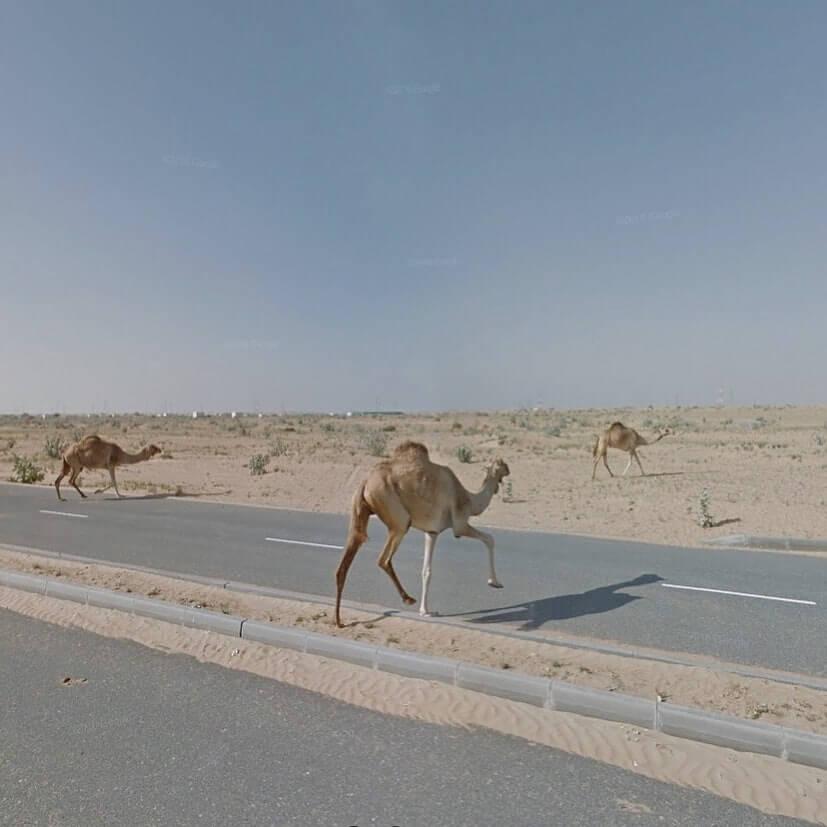 امارات متحده عربی - شارجه