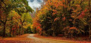 به پیشواز پاییز رنگارنگ
