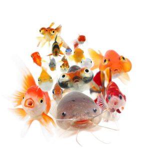 اولین کتاب عکس چهره ماهیها