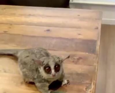 اگه گفتید اسم این حیوان دوست داشتنی و بازیگوش چیه؟