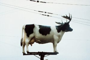 Cow-on pole, with antlers