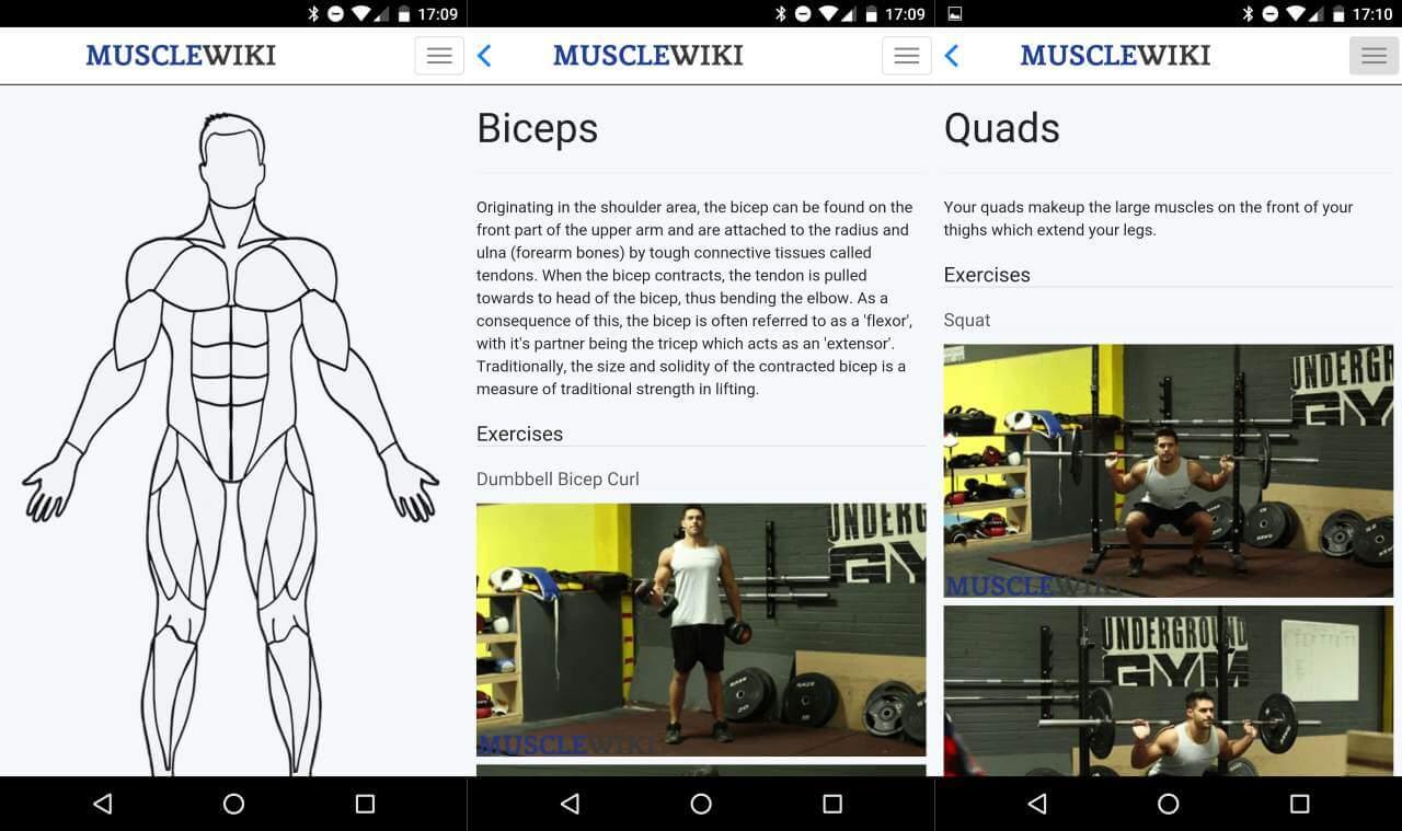 ویکیپدیای عضلات