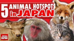 آیا دوستدار حیوانات هستید: این 5 جاذبه گردشگری ژاپن را از دست ندهید
